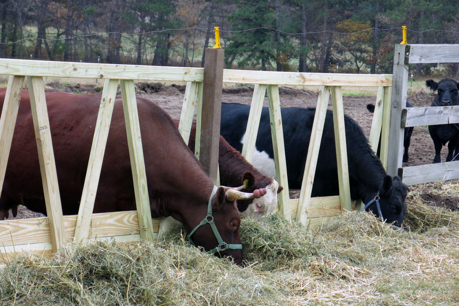 detail on com horse and alibaba product cattle buy feeder hay